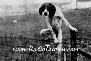 Truyện ma làng quê: Vong chó và Oan hồn nàng hầu
