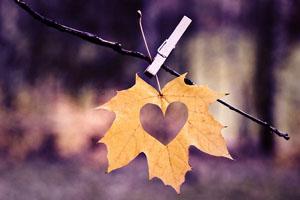 Để tình yêu dẫn lối