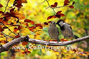 Mùa thu trong ký ức - Trà Bình