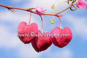 Bí quyết tăng vận đào hoa trong tháng cô hồn
