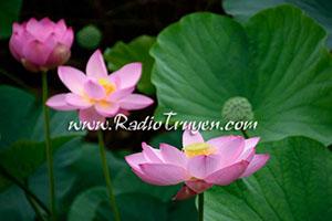 Cuối mùa nhan sắc - Nguyễn Ngọc Tư