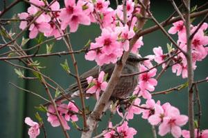 Điều ước của mùa Xuân