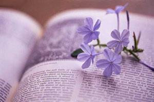 Rời một mùa yêu - Phiên Nghiên