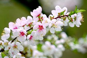 Tâm tình ngày Xuân